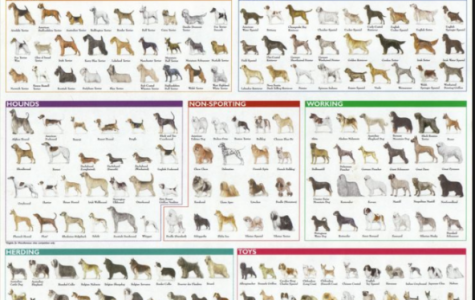 As you can tell, there are many different dog breeds. What breed would you choose?
