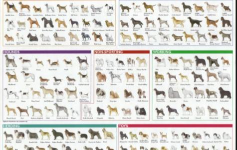 My 10 Favorite Dog Breeds