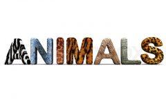 Amazing Animals: 10 Weird Lookin' Animals