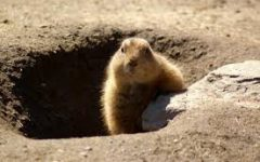 All About History: Groundhogs Day