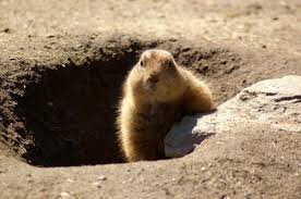 Ground Hog telling if it's Winter or Spring!  https://www.thespruce.com/groundhog-day-party-ideas-2104329