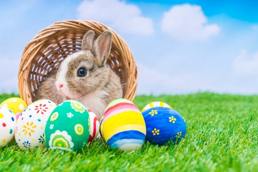 Two+Symbols+of+Life+and+Easter%2C+A+Bunny+and+Easter+Eggs