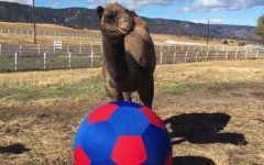 Camel soccer! Source: YouTube