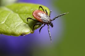 This is a Deer Tick questing. If you don't know what questing is, then read my story!