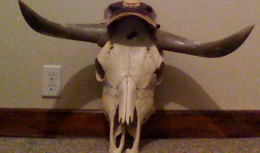 Hat, but on a cow skull.