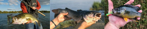 these are the fish I was talking about in this story.