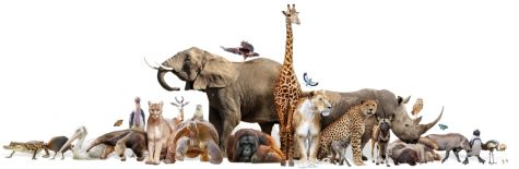 ZOOtastic Information About Zoos