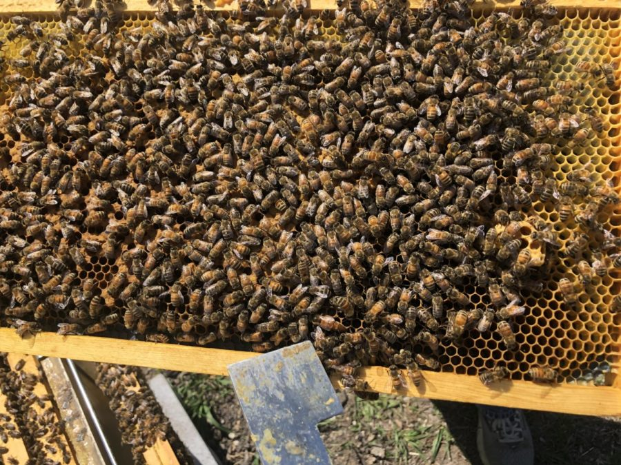 Bees%21%21
