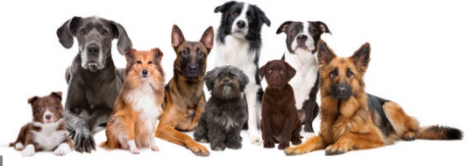 These are some of the different breeds of dogs.